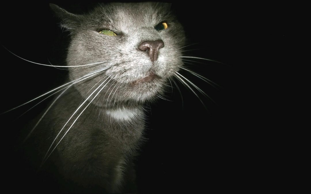 Hairballs and other things that go splat in the night