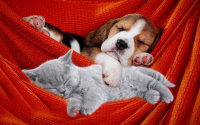 Sleeping with Dogs and Cats